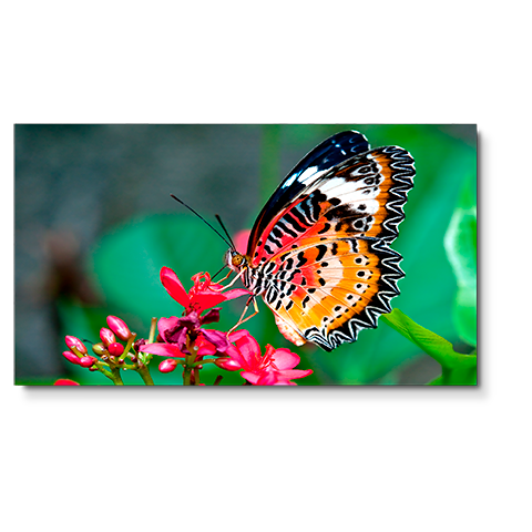 "NEC, 49"", UN492S, Video, Wall, Display/, 24/7, Usage/, 16:9/, 1920, x, 1080/, 3500:1/, S-IPS, Panel/, VGA, DVI, HDMI, DP/, 0.9mm, Bez,"